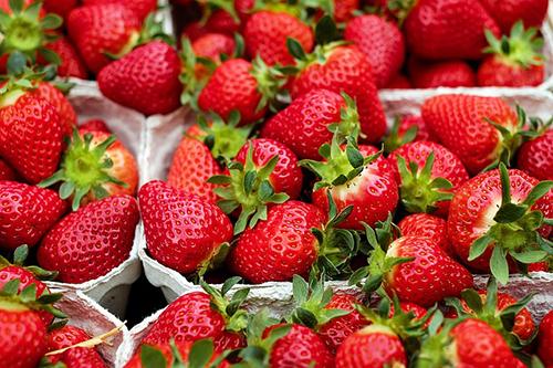 Goûtez aux fraises de la Vallée de Dordogne